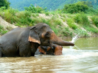 Yes, elephants really do blow water out of their trunks