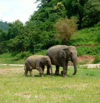 There were baby elephants, too!